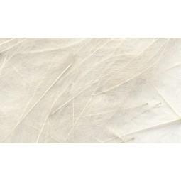 Plume CDC Petitjean White / Blanc