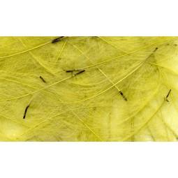 Plume CDC Petitjean Dirty Yellow